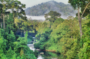 lowland rain forest