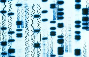 Autoradiogram_DNA