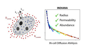 Image from Licence Details: INDIANA – IN-cell DIffusion ANAlysis