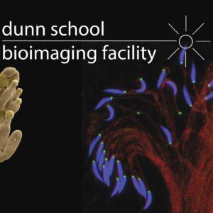 Dunn School bioimaging facility image